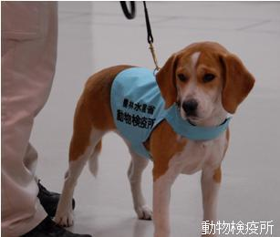 Detectdog_n1