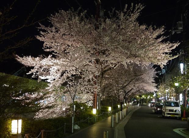 20120412sakura2